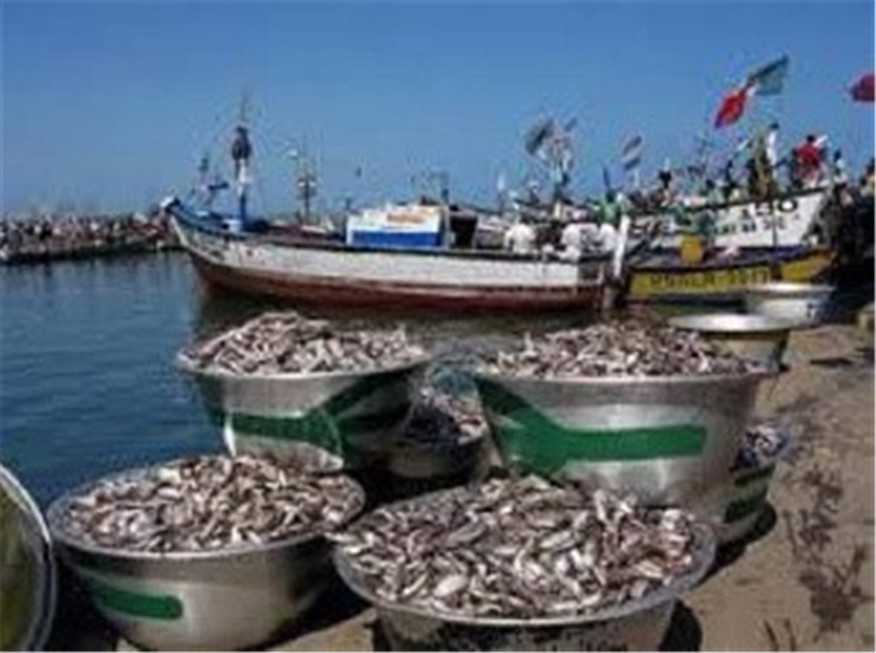 Stakeholders in the Fishing Industry Complain about Saiko Activities by Foreign Vessels